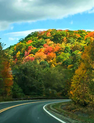 Autumn Trees Autumn Colors Autumn Leaves Scenics Outdoors Seasons Change Trees Of Eyeem Multi Colored Earth Tones Road Side On The Road Fall Leaf Beautiful Nature Fall Color Change Trees Collection The Way Forward Beauty In Nature Relaxation