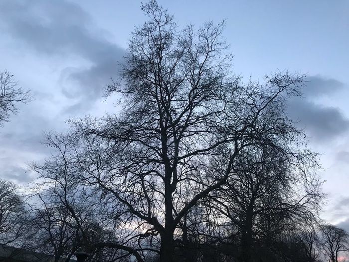 shades of winter No Edit/no Filter Winter Bare Tree Tree Low Angle View Sky Branch Nature Shades Of Winter Outdoors Beauty In Nature Tranquility