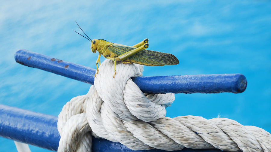 Close-Up Of Geasshopper On Rope