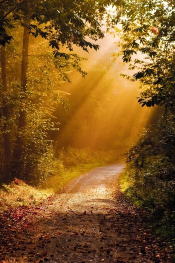 Forest Tree Nature Tranquility No People Light And Shadow Landscape Leaf Rayon De Soleil Sunlight And Shadow Sunlight Through Trees Sunlight, Shades And Shadows Yellow Color Yellow Background Tranquil Scene Beauty In Nature The Way Forward Outdoors Scenics Growth Day Sky EyeEmNewHere