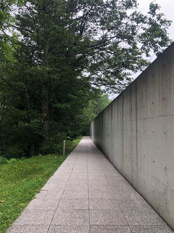 Architecture Church Tadao Ando TADAOANDO Plant Tree The Way Forward Direction Growth Day No People