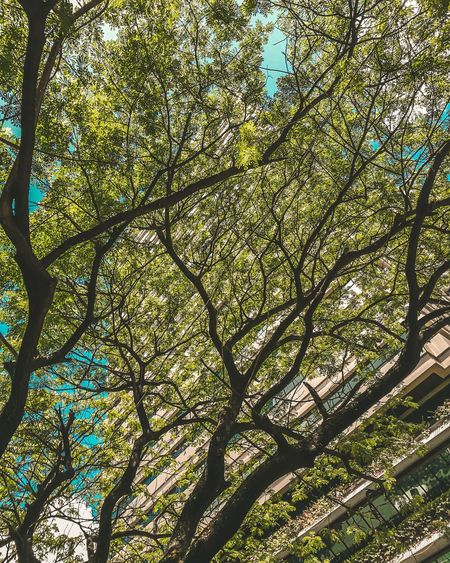 walk around shot Tree Branch Full Frame Pattern Close-up Sky Green Color Plant Life