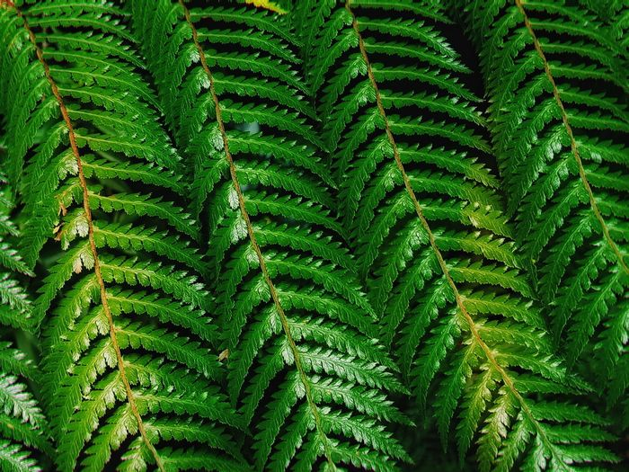 Silver fern Newzealand Photos Milford Sound Milford Sound, New Zealand Fern Silver Fern Leaf Plant Green Color Photosynthesis Greenery