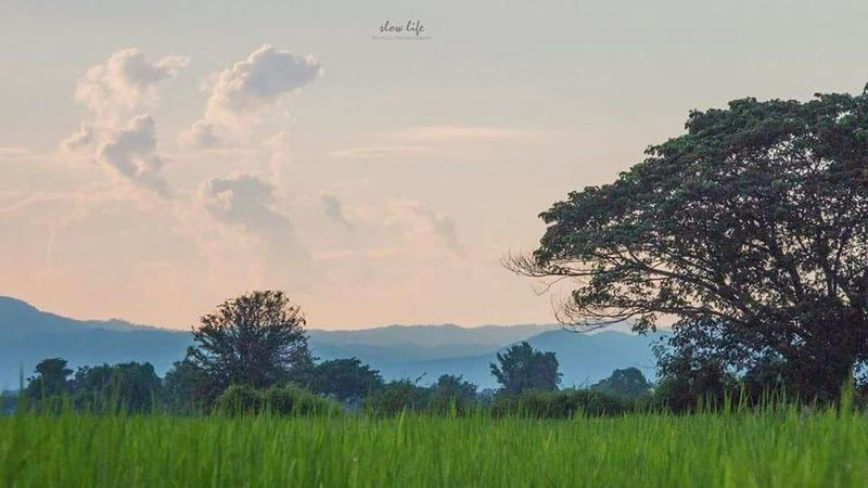 Enjoy your own life!! without..Comparing it with that of another.. Relaxing Enjoying Life Hello World Photography Good Morning Lampang | Thailand Landscape Living Slow Life