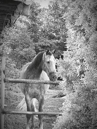 Horse ❤️ Poland