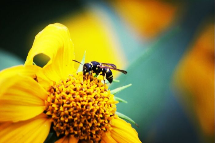 Relaxing Flowers Nature Macro Canon Photography Yellow Insects