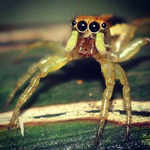 Haaaiiii.... Spider Spiderworld Ig_macro Ig_spider igglobalclubmacro kings_insects greatshoot cute tgif_macro instagaruda_macro
