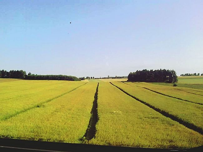 Poland Train Window Taking Photos Check This Out Traveling Trip Hello World Fields View Colza