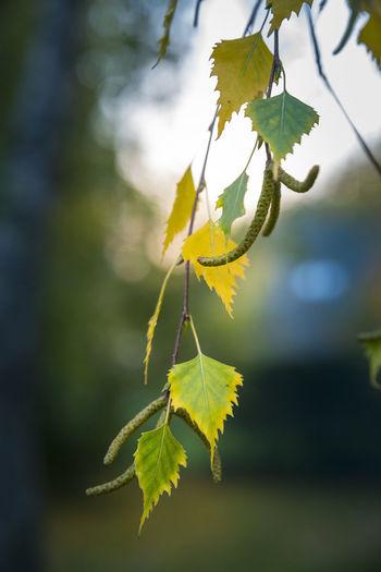 autumn leaves -