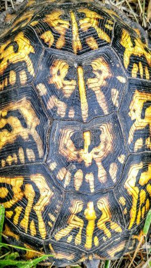 Nature Beautiful Pattern Shell Up Close Yellow Turtle Swamp Beach Wetland