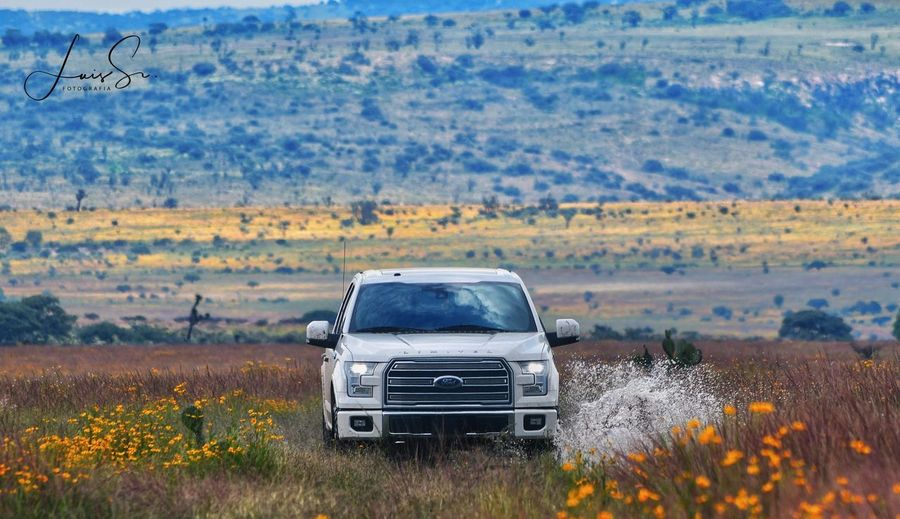 Limited Truck Ford F150 Transportation Mode Of Transportation Motor Vehicle Plant Landscape Land Vehicle Nature Car Outdoors Day Environment