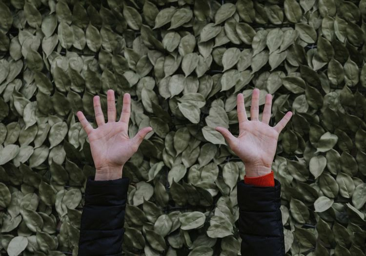 Cropped image of hands against plants