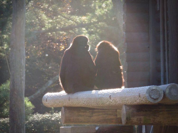 新年明けましておめでとうございます!今年もよろしくお願いします😆🙏今年は素敵な写真撮れるように頑張りたいです!前にも同じような写真載せました😅 Animals Happynewyear2016 Happy Happy :) NewYear Monkey 2016 Monkeys 申年 猿