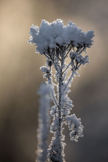 Beauty In Nature Close-up Cold Temperature Day Focus On Foreground Fragility Frost Frozen Ice Nature No People Outdoors Snow Snowflake Tranquility Tree Weather White Color Winter