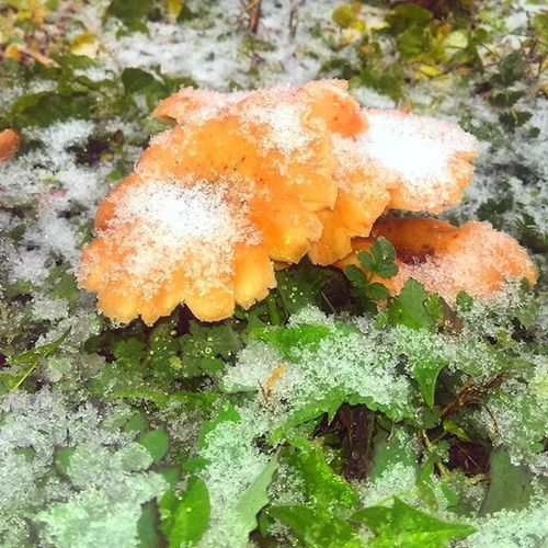 Mushroom ❆ Wintertime Winterwonderland Winteriscoming Winter2015 Nature Winter Winterbreak Winterscoming Winterfashion Wintergreen Winterishere Wintercoat Cloudy Couldlovers Snow Snowman Pond Cold Ice Icy