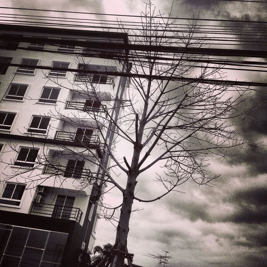 Creepy Tree Creepy Building Creepy Atmoshpere Creepy House