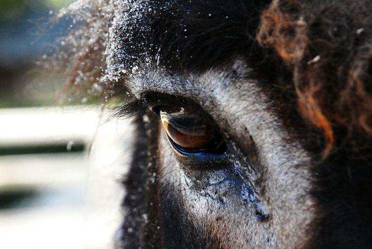 Eye to eye Soulful Eye Donkey Snow First Eyeem Photo