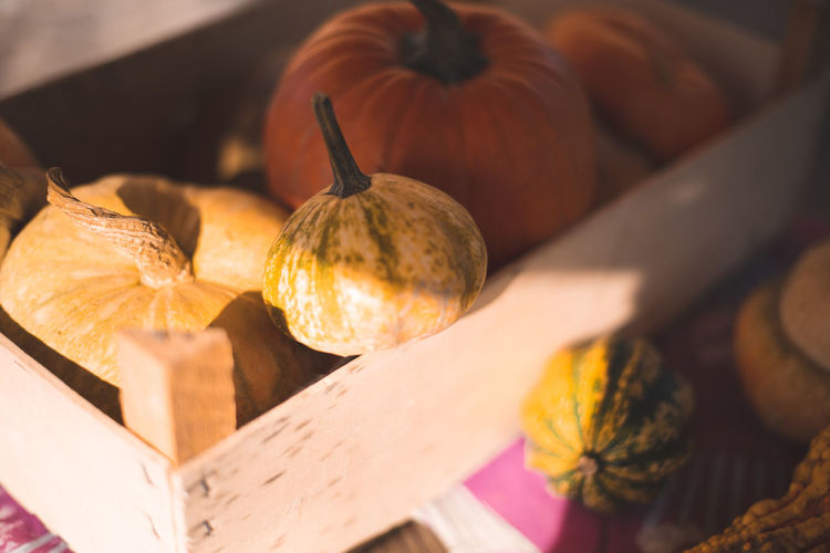 Autumn Mood Food And Drink Food Healthy Eating Pumpkin Wellbeing Still Life Vegetable Autumn Freshness Close-up No People Wood - Material Group Of Objects Selective Focus Indoors  Fruit Orange Color High Angle View Sunlight Table 17.62°