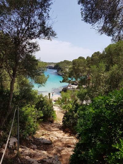 Cala Mitjana Beach Mallorca Tree Water Lake Sky