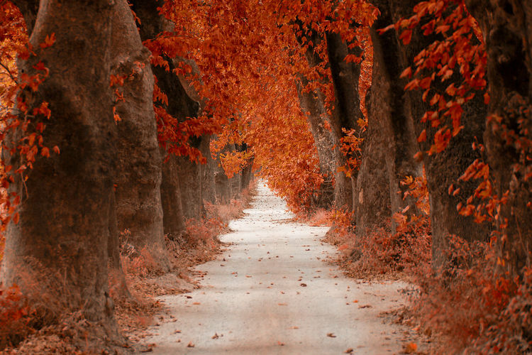 Empty road amidst trees on field during autumn