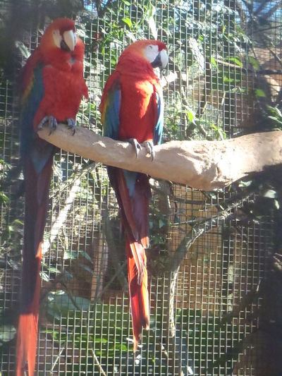 Ave, animals, Domestic Animals One Animal Pets,,nature No People Nature Bird,macaw ,exotic