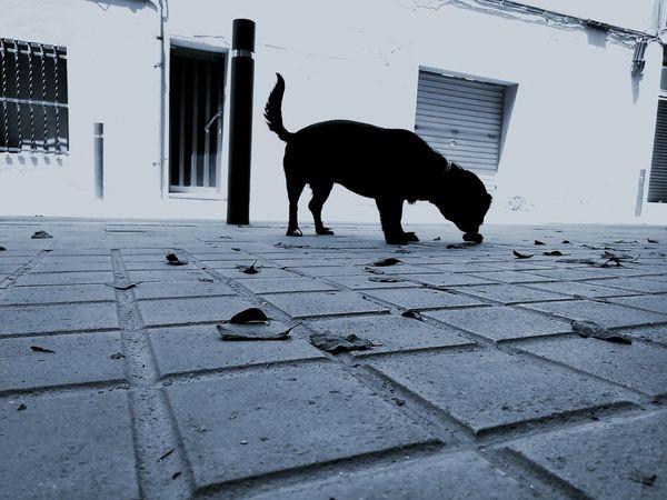 Animal Nature Barcelona Streets