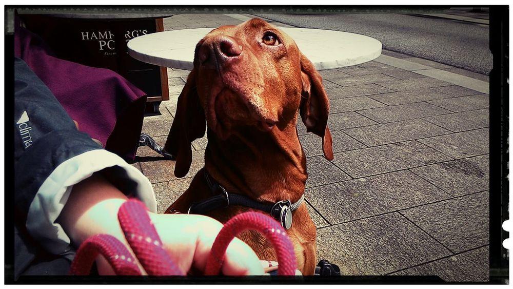 Telling Stories Differently Taking Photos Hi! Taking Photos Pets Corner