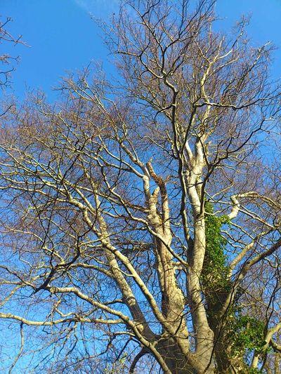 Tree Mend Us