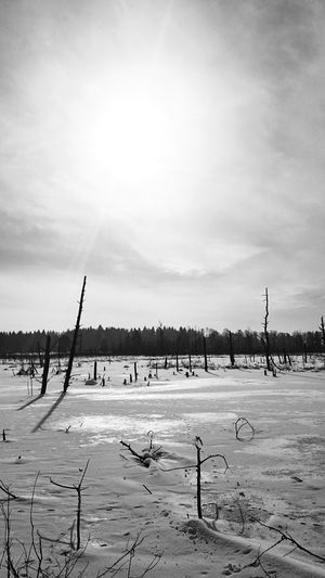 Wooden posts on snowy field against sky