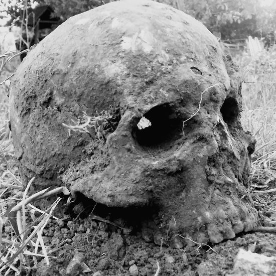 skull from our garden Human Skull Respect For The Deads Blackandwhite Photography Old Cemetery