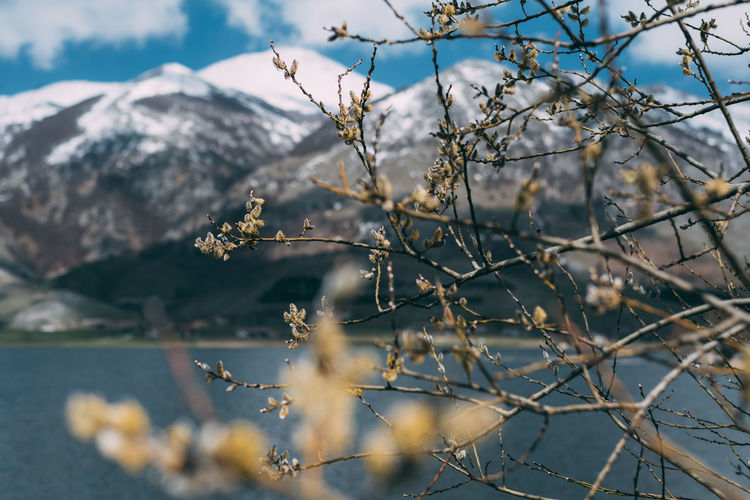 April Beauty In Nature Branch Cherry Blossom Close-up Cold Temperature Day Flower Flowering Plant Focus On Foreground Growth Mountain Nature No People Outdoors Plant Selective Focus Sky Snow Snowcapped Mountain Tranquility Tree Winter EyeEmNewHere