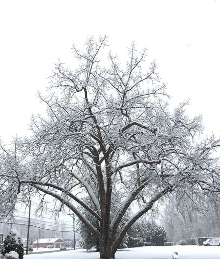 Plant Tree Sky Branch Low Angle View No People Nature Beauty In Nature Snowing