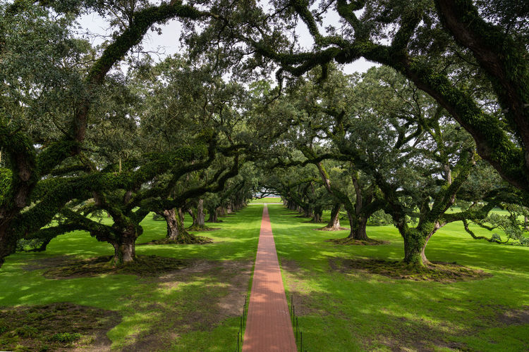 Oak Alley Plantation beauty in Nature day diminishing perspective direction foliage Footpath Grass Green color Growth Nature no people oak alley plantation outdoors park park - man made space Plant Road the way forward Tranquility Tree tree canopy Treelined vanishing point Beauty In Nature Day Diminishing Perspective Direction Foliage Footpath Grass Green Color Growth Nature No People Oak Alley Plantation Outdoors Park Park - Man Made Space Plant Road The Way Forward Tranquility Tree Tree Canopy  Treelined My Best Travel Photo A New Beginning Holiday Moments 2018 In One Photograph