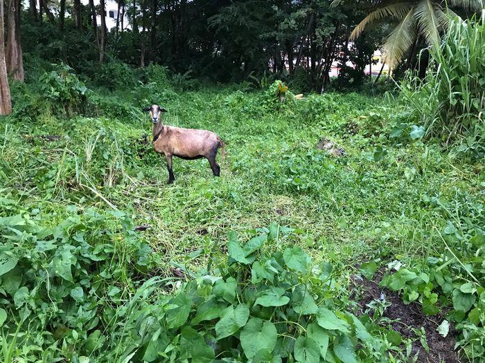 Deer in a field