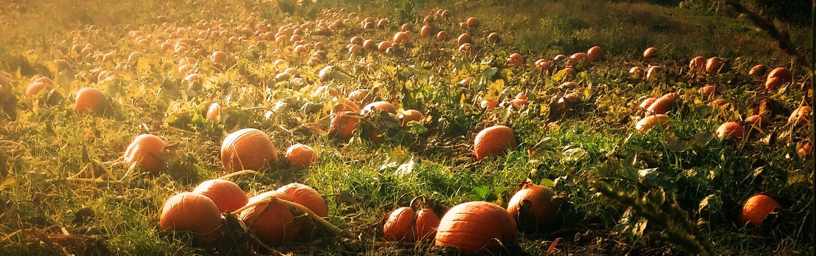 Pumpkin Patch Eyeemnaturelover Landscape_Collection Sunset_collection