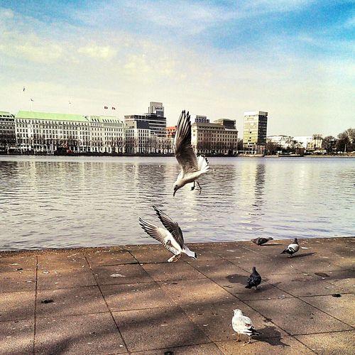 Den Schnabel nie voll genug bekommen.... 😁🐦 Möwe Hello World Followme Norddeutschland Möwenleckerbissen Taking Photos Hamburg Mobilephotography Jungfernstieg Seagulls