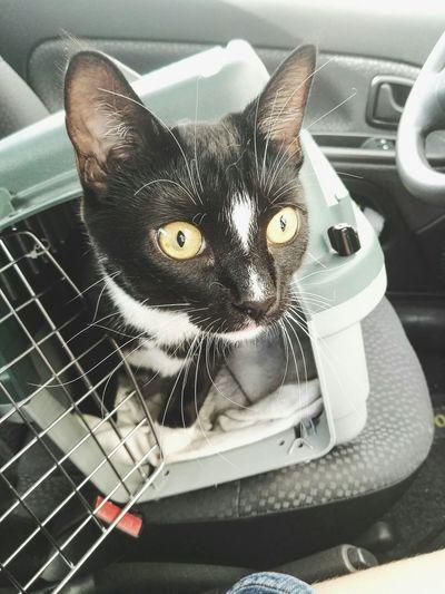 Portrait of cat sitting in car