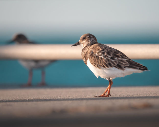 Close-up of seagull perching on a beach