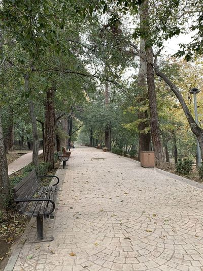 Footpath amidst trees in park