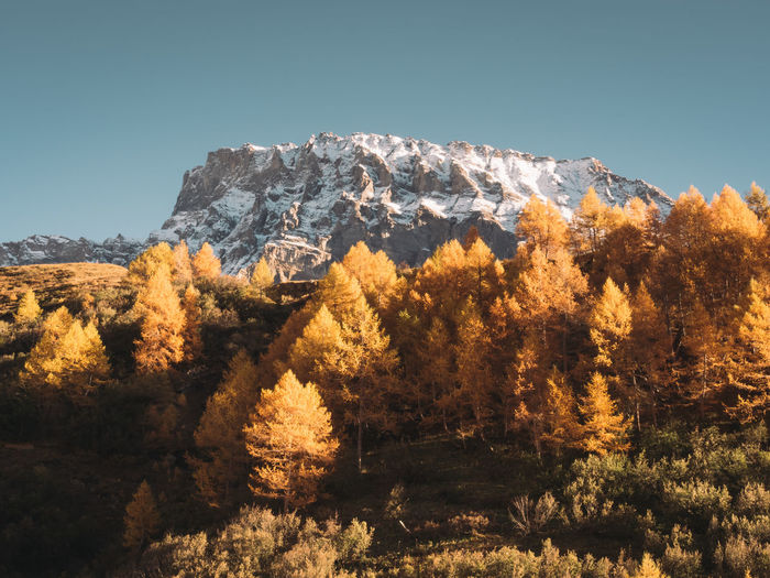 Low angle view of trees and mountains during autumn