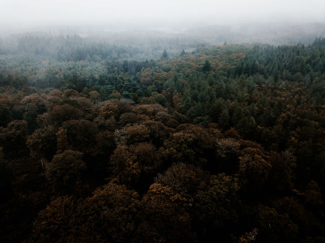 Autumn Forest drone view Tree Plant Beauty In Nature Fog Nature Environment Scenics - Nature Forest No People High Angle View Tranquil Scene Day Tranquility Non-urban Scene Landscape Lush Foliage Land Growth WoodLand Outdoors Pine Tree Rainforest Coniferous Tree Tropical Rainforest