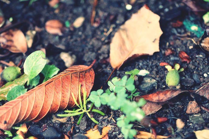 Folhas Leaf