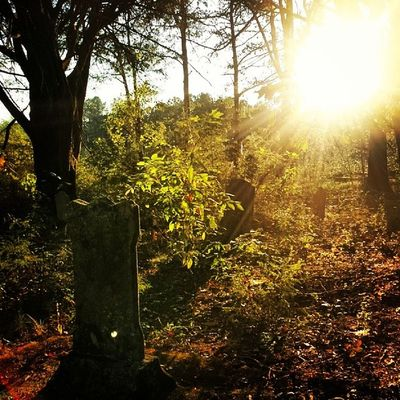 A long-forgotten graveyard..... Harrisonga Graves Forgotten Sunflare ruralgeorgia georgia
