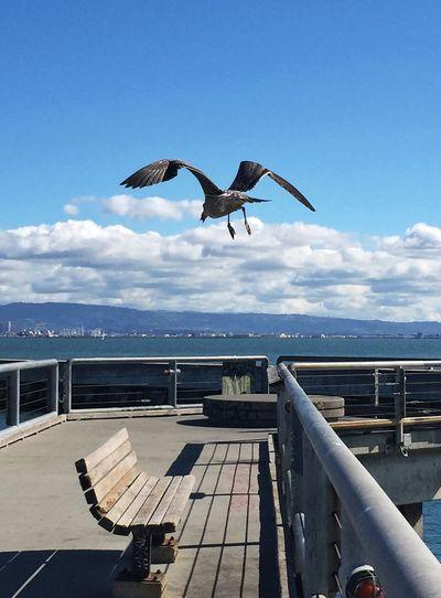Bird flying empty bench at deck