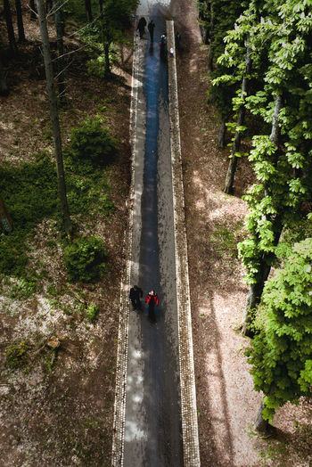 High angle view of people on road amidst trees in forest