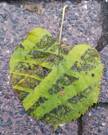 Leaf High Angle View Close-up Green Color Leaves Fallen Autumn Autumn Collection Plant Life Fall Green Ground