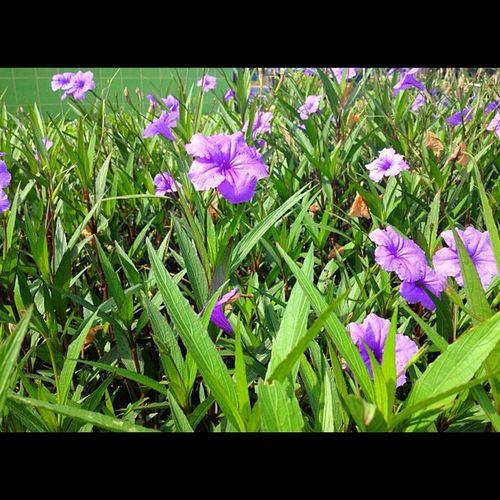 อรุณสวัสดิ์องครักษ์ Flower Thailand Working