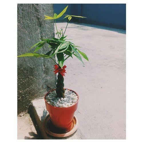My little love. ♥ Moneytree Green