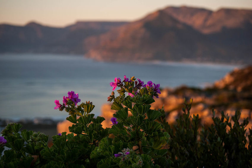 Bay Beauty In Nature Flower Flower Head Flowering Plant Focus On Foreground Fragility Freshness Growth Land Mountain Nature No People Outdoors Plant Scenics - Nature Sea Sky Tranquil Scene Tranquility Vulnerability  Water