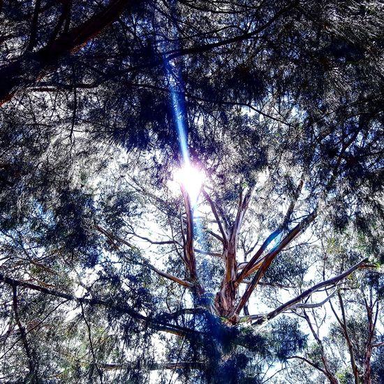 Urban Forest Sunlight Tree